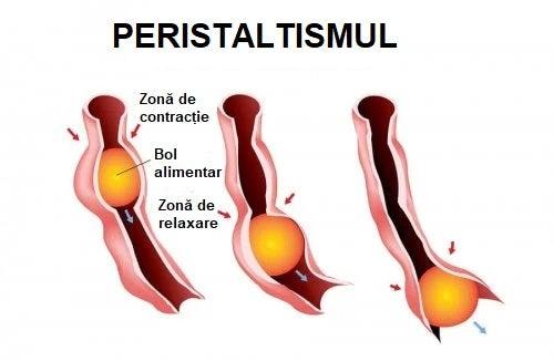Ce este peristaltismul