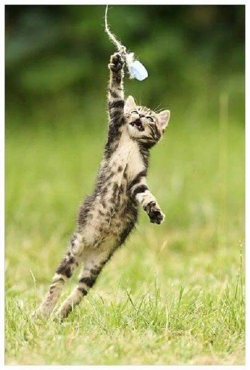 Pisică ce sare în aer