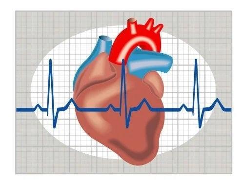 Reprezentare grafică a inimii