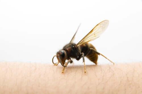 Cum se tratează înțepătura de viespe asiatică?