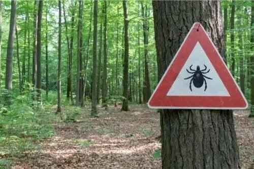 Tratament pentru boala Lyme