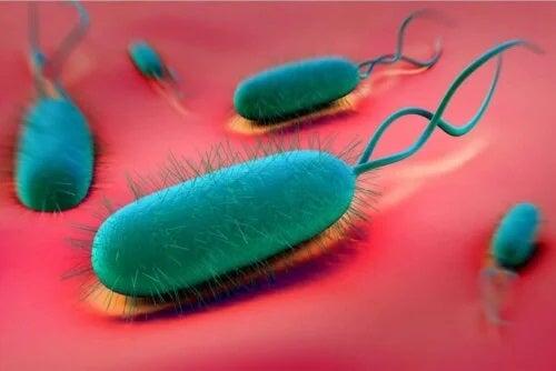 Bacterii ce provoacă ulcer gastric