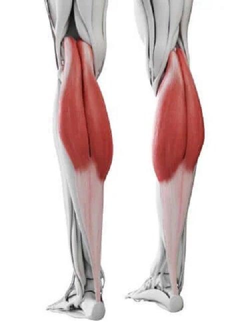 Mușchii gambelor la om