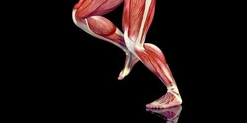 Punctele de declanșare din mușchii picioarelor
