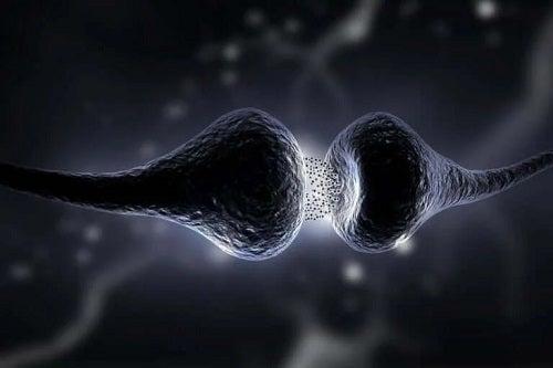 Sinapse neuronale
