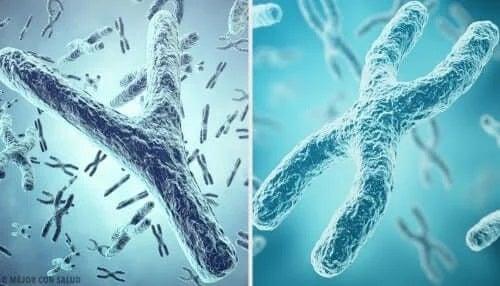 Exemple de telomeri