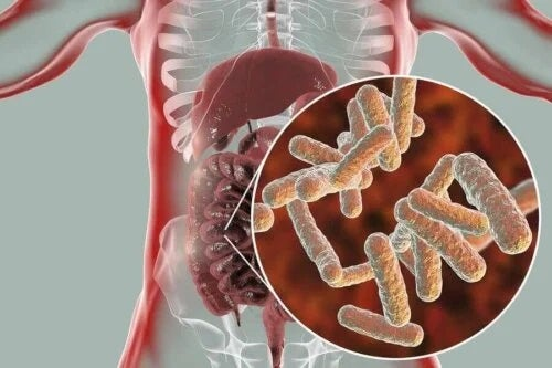 Bacterii benefice din intestine