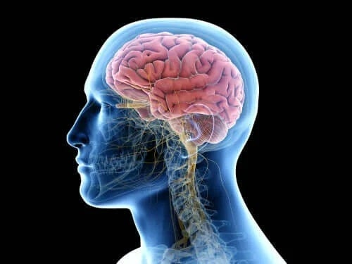 Creier în corpul uman