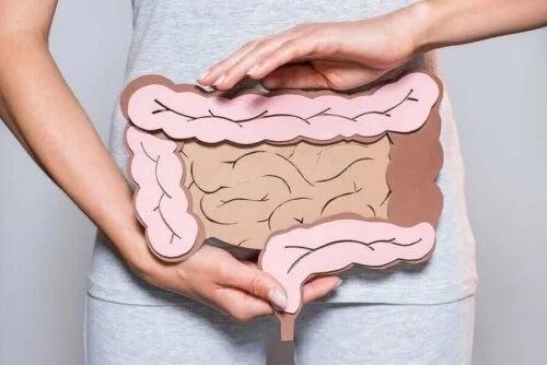 Femeie care ține o machetă cu intestine