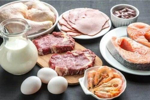 Funcțiile proteinelor în organism