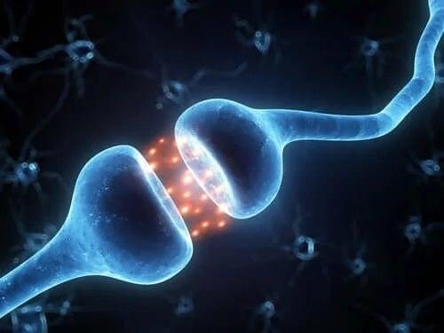 Neuroni care comunică între ei