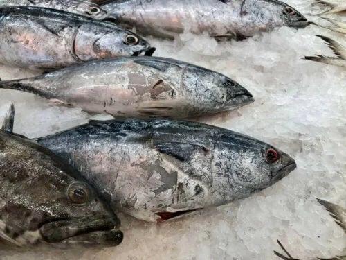Pește pe pat de gheață