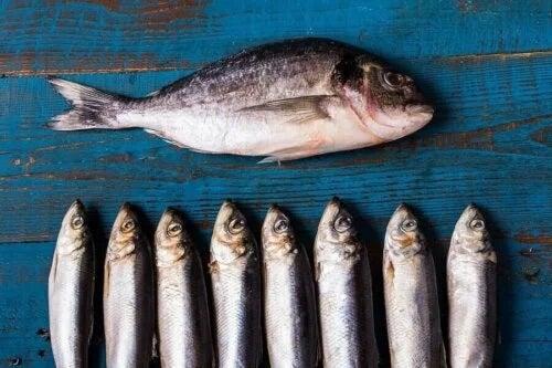 Peștele gras pe lista de alimente pentru vârstnici