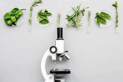 Plante privite la microscop