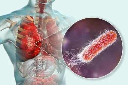 Există bacterii în plămâni?