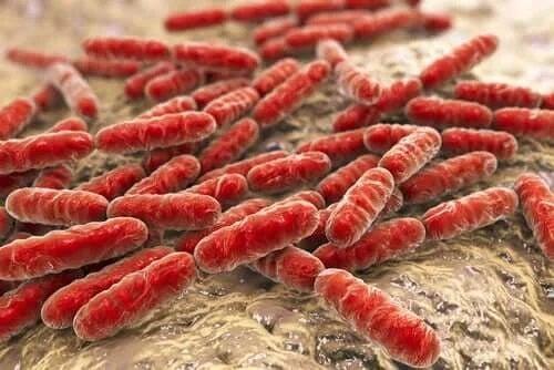 Bacterii în corpul uman