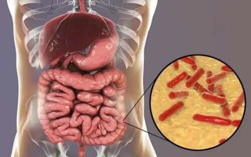 Cum recunoști dezechilibrele microbiotei intestinale?