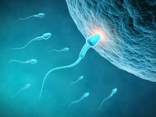 Dieta influențează calitatea spermei