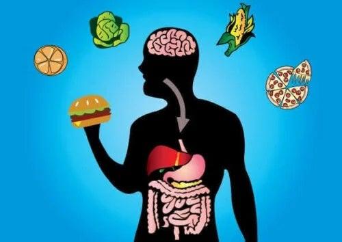 Digestia alimentelor