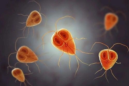 Patogeni Giardia