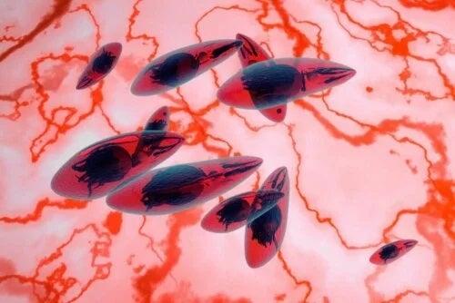 Parazitul ce provoacă toxoplasmoza
