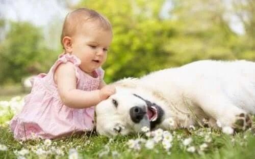 Bebeluș care mângâie un câine