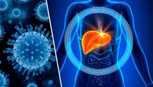 Hepatita toxică