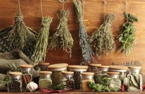 Ierburi aromatice și condimente