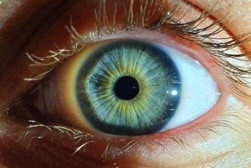 Pupila ochiului uman