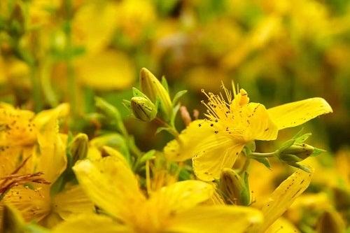 Flori de sunătoare
