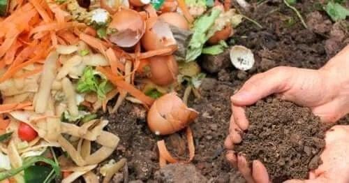 Ai grijă de mediu reciclând produsele alimentare