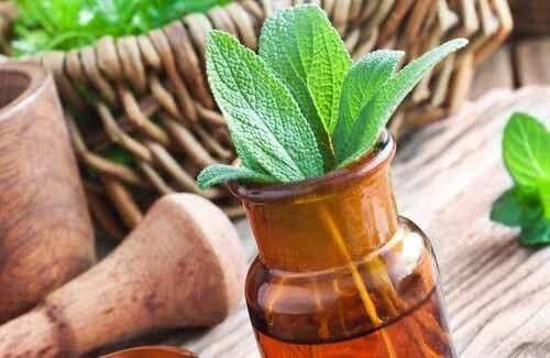 Cele mai bune plante medicinale