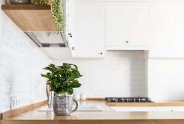 Cum să crești ierburi proaspete în bucătărie