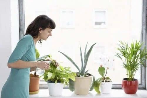 Femeie care știe cum să crești ierburi proaspete acasă