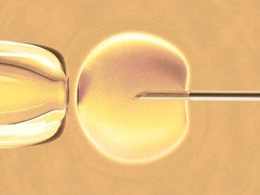 Ce este fertilizarea in vitro? Informații esențiale