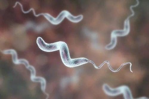 Patogen ce provoacă infecțiile cu Campylobacter