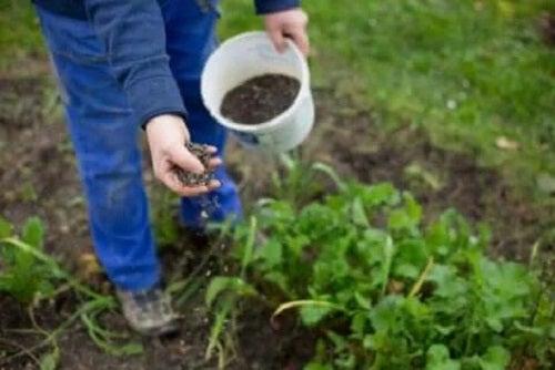 Persoană care plantează semințe în grădină