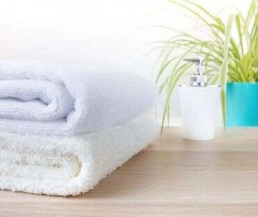 Cele mai potrivite plante pentru baie