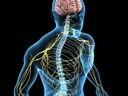 Sistemul nervos uman