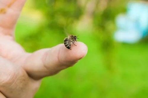 Cum tratezi înțepăturile de albine?