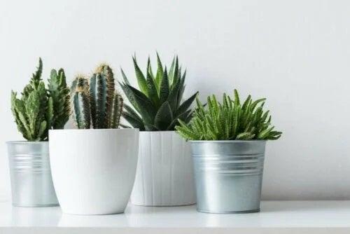 Plante ușor de îngrijit în ghivece