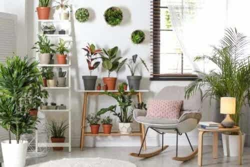 Plante ușor de îngrijit pentru interior și exterior