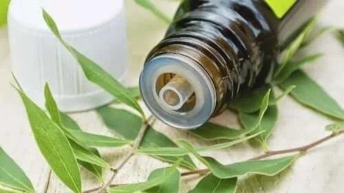 Uleiuri esențiale pentru sinuzită din plante aromatice