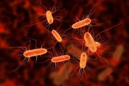 Bacterii patogene din spitale