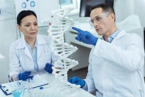 Medici care analizează sindromul Zellweger
