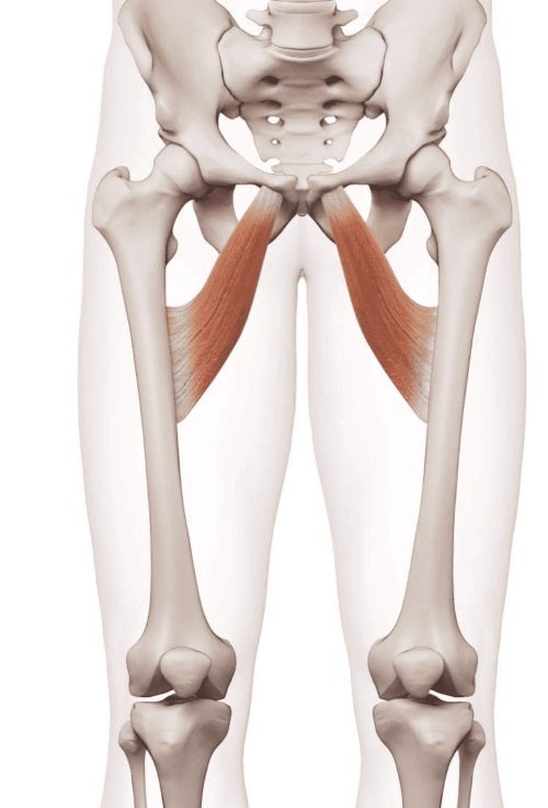 Mușchii adductori ai corpului uman