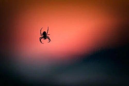 Veninul de păianjen și leziunile cerebrale