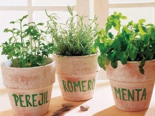Plante aromatice în ghivece mari