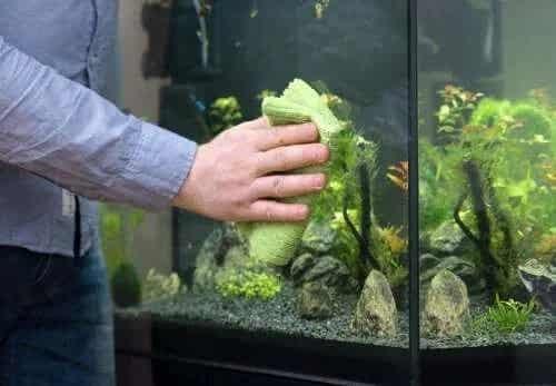 Cum cureți un acvariu în mod simplu
