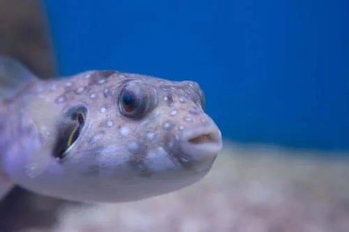 Intoxicația cauzată de pește cu conține natural toxine